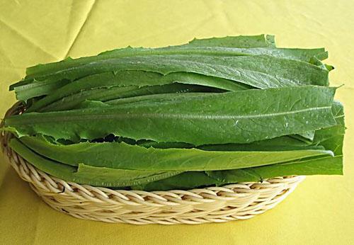 يالىڭاچ سۇلۇ(油麦菜)