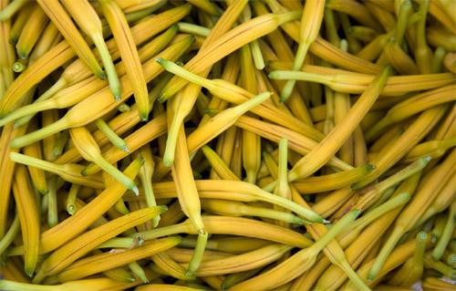 نەغەزگۈل(金针菜)
