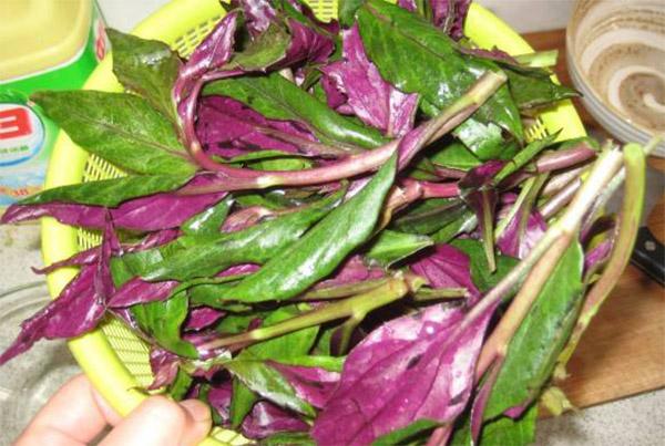 سۆسۈن مۇرچۇبا (紫背天葵)